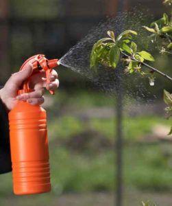 Как и какво да обработва градина през пролетта от болести и вредители