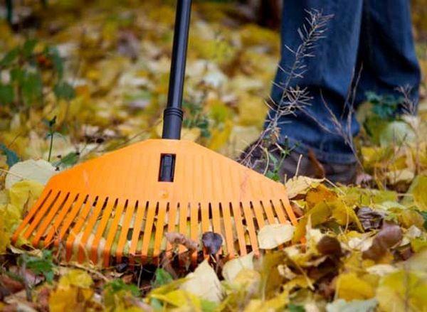 Как да подготвим правилно градина и зеленчукова градина за зимен списък със задачи и практически съвети